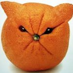 میوه آرایی13