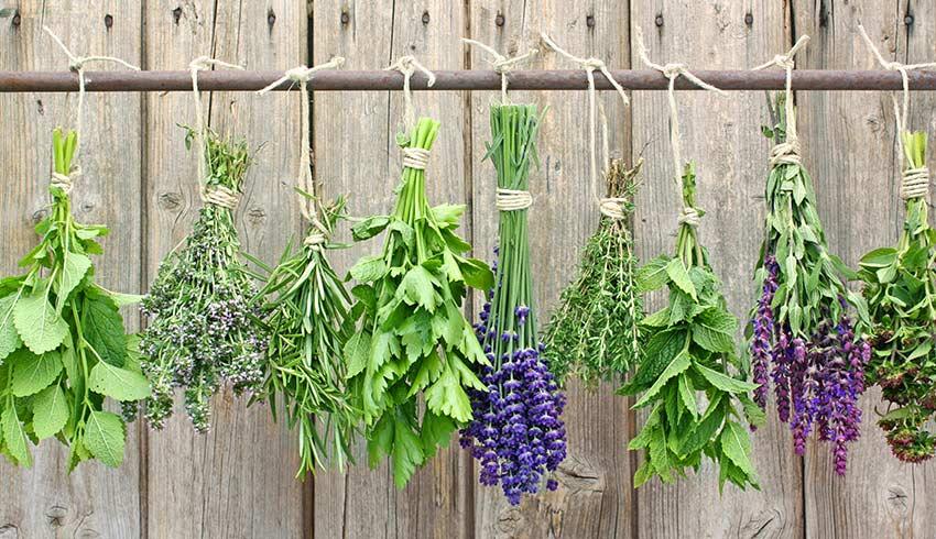 باغ گیاهان دارویی