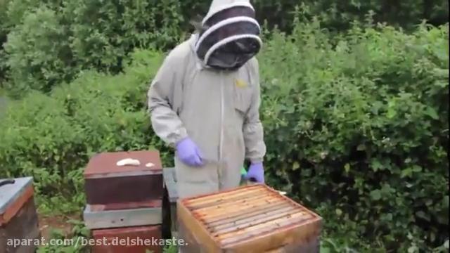 آموزش تخصصی پرورش زنبورعسل_01