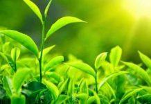 لاغری با داروهای گیاهی