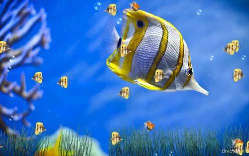 پرورش ماهی زینتی 4