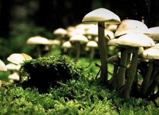 Mushroom-Farming