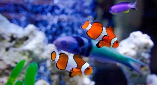 پرورش ماهی زینتی 2