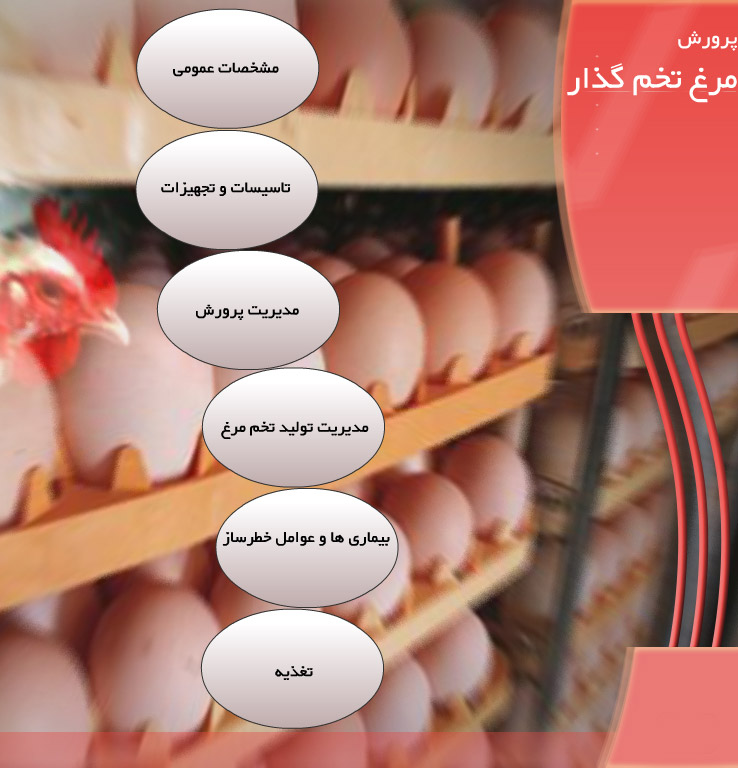 محتوای آموزشی یک سی دی پرورش مرغ تخم گذار