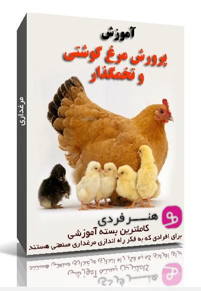 بهترین بسته آموزشی راه اندازی مرغداری (پرورش مرغ گوشتی و تخم گذار)
