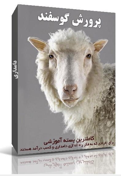 آموزش نحوه پرورش گوسفند و دامداری