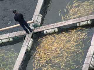 قفس-ماهی-ثابت