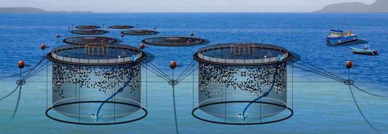 قفس پرورش ماهی چیست و هزینه ساخت آن چقدر است؟ - هنر فردی