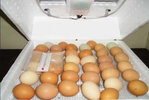 قرار-دادن-تخم-ها-در-دستگاه1