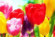 نام و تصویر گل ها
