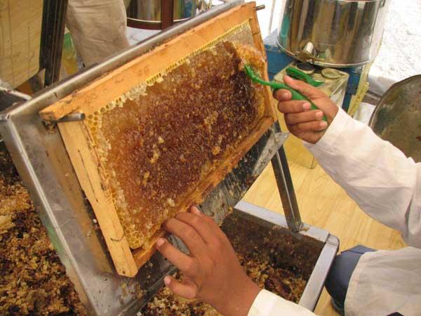 تولید-عسل