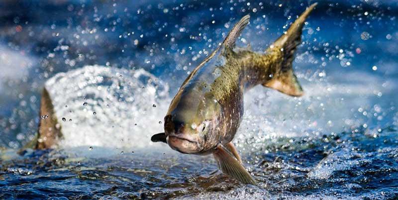 پرورش-ماهی