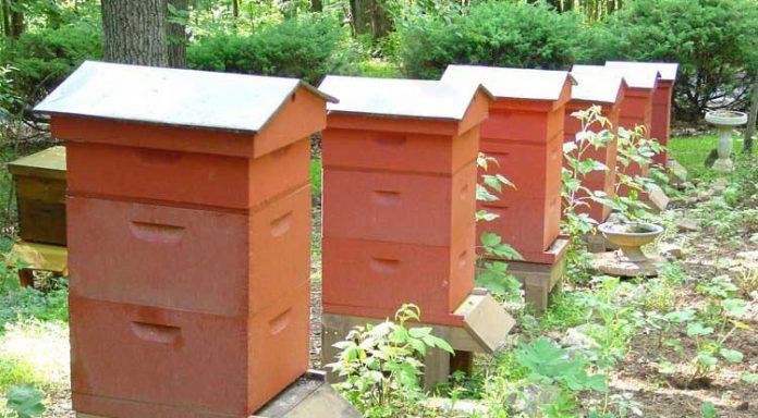 کندوی-زنبور