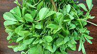 Aesthetic bunch of fenugreek greens.jpg