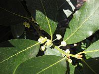 Gardenology-IMG 4930 hunt10mar.jpg