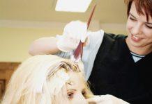 رنگ کردن مو با زردچوبه