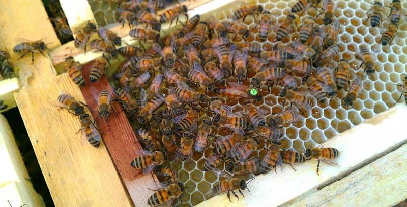 Photo of آموزش تغذیه و نگهداری کاملا اصولی زنبور عسل در زمستان