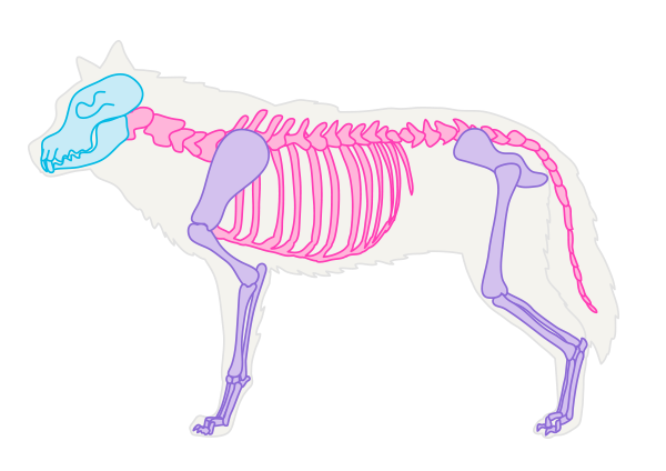 Description: drawingdogs_1-1_skeleton