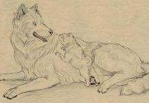 نقاشی سگ و گرگ