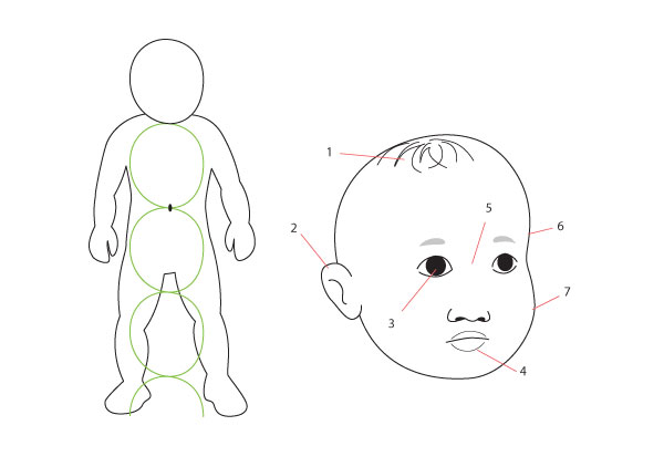 Baby proportions and face