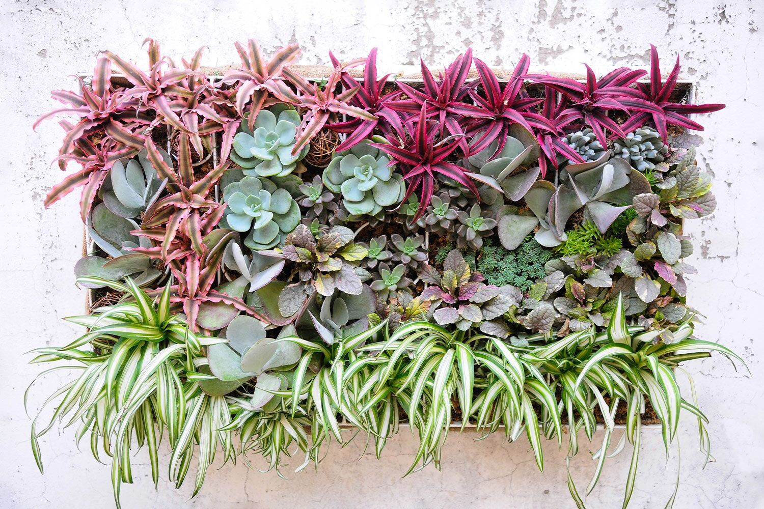 best-plants-for-living-wall.jpg