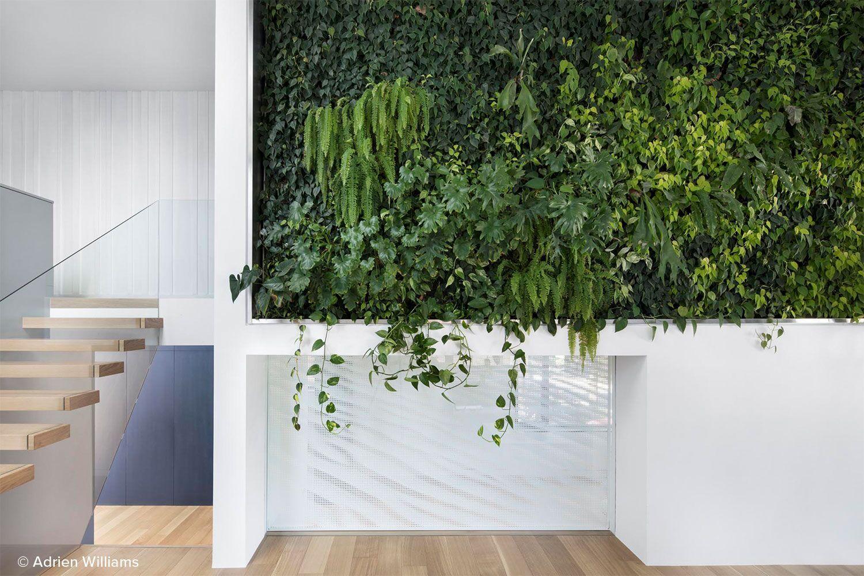indoor-living-wall.jpg