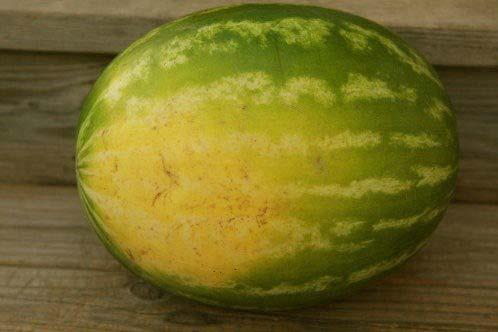 هندوانه را بلند کنید