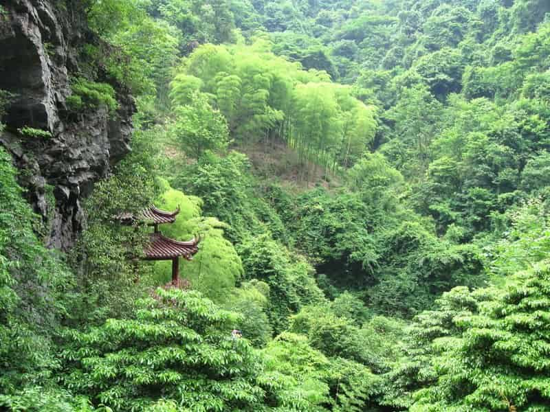 https://fengshuinexus.com/wp-content/uploads/2016/09/high-bamboo-forests-of-central-china.jpg