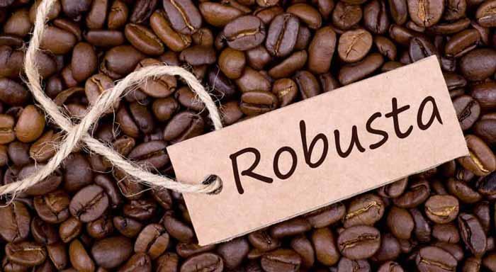 دان قهوه روبوستا