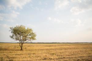 Tree in an empty field